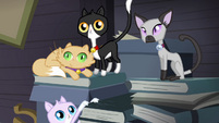 Cats sitting on the books S4E09