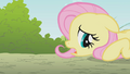 Fluttershy laying on the ground S1E07.png