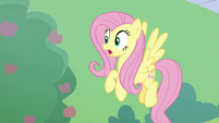 Fluttershy sees buckball flying at her S8E24