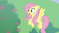Fluttershy sees buckball flying at her S8E24