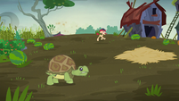 Turtle trying to run away S5E23