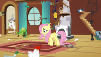 Fluttershy addresses the animals S03E13