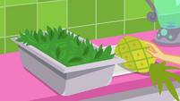 Applejack putting down a pineapple SS9