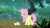"Fluttershy ""a herd of injured chimerae!"" S8E18"