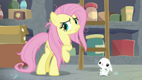 Fluttershy decides to go see Zecora S9E18