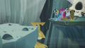 Gilda, Pinkie, and Rainbow look at the Idol S5E8.png