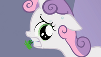 Sweetie Belle sweating S2E05