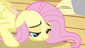 Fluttershy recovering S3E13.png
