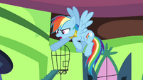 "Rainbow Dash ""he did that on purpose!"" S03E10"