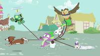 The pets drag Spike across town S03E11