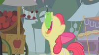 Apple Bloom maçã T1E12