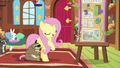 "Fluttershy ""do it my way this time"" S7E5.png"