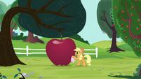 Applejack polishing a giant apple S5E13