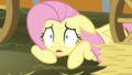 """Fluttershy """"How could I forget?"""" S5E21.png"""