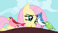 Fluttershy talking to bird S01E01.png