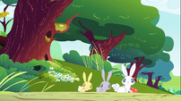 Rabbits with apples S1E23