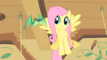 Hummingway sings to Fluttershy S1E22.png