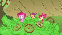 Pinkie Pie, Apple Bloom and Scootaloo sticking heads out of lettuce S3E4