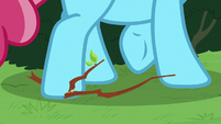 Chiffon Swirl steps on a twig S7E13