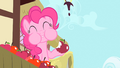 Pinkie Pie eating an apple S1E20.png