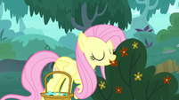 Fluttershy picking flowers S8E18