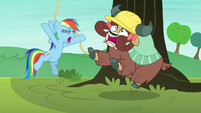 Rainbow Dash yelling at Yona S8E9