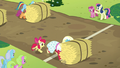 Orchard Blossom pushes hay bale over the line S5E17.png