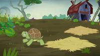 Turtle sees Hooffield stampede S5E23
