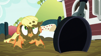 Applejack muddy and looking up S6E15