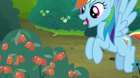 "Rainbow Dash ""good enough to eat!"" S7E16"