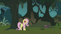 Fluttershy freaks out in the Everfree forest S1E17.png