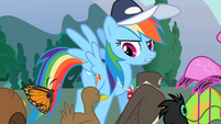 Rainbow Dash with the animals S2E07