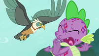 Spike luring the roc away from Zecora S8E11