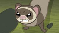 Ferrel growling at Fluttershy S8E13