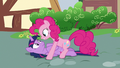 Pinkie Pie tackles Twilight to the ground S7E14.png
