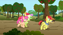 Granny Smith and Apple Rose trying speeding ahead of everyone S3E8