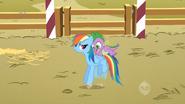 Rainbow Dash bucking to get Spike off her S1E13