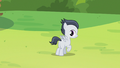 Rumble hears Sweetie Belle's announcement S7E21.png