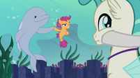 Scootaloo and porpoise bump fins S8E6