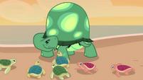 Baby turtles imprinting on Tank EGDS14