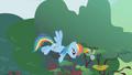 Rainbow Dash herds a stray parasprite S1E10.png