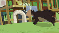Grizzly bear blindly charges toward hospital S7E5