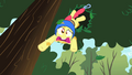 Apple Bloom falling out of a tree S01E23.png