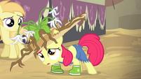 Applebloom campirana