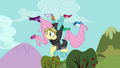 Birds picking up Fluttershy S3E05.png