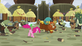 Pinkie Pie and yaks continue to stomp S7E11.png