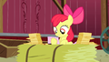 Apple Bloom continues reading replies S3E08.png