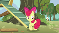 Apple Bloom uncomfortable and hiding her flank S5E4.png