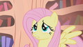 "Fluttershy ""seems awfully dangerous"" S1E09.png"