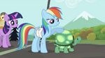 Rainbow Dash with Tank S2E07
